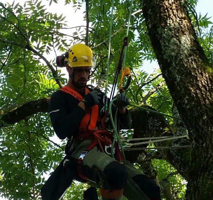 Elagage de grands arbres