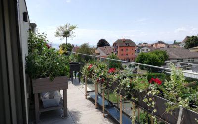Création d'un potager en terrasse et plantations bacs